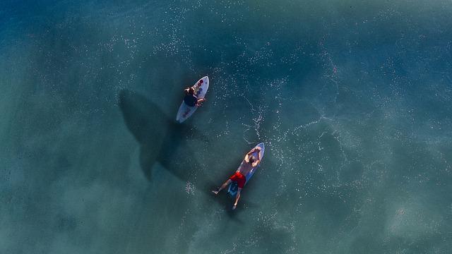 žralok pod sufraři