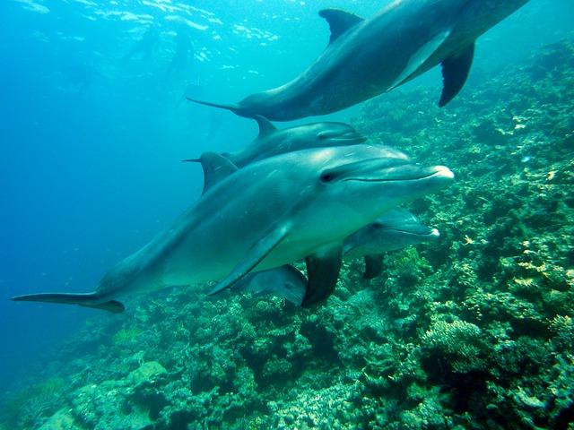 delfíni u útesu